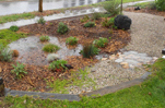 rain garden rainwater groundwater storm water runoff ocean pollution