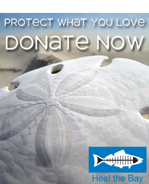 Send a Gift to the Sea: Give Back Now!