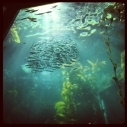 Marine Protected Areas MPAs Kelp Forests