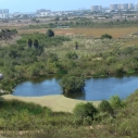 Ballona Wetlands Heal the Bay BioBlitz Youth Summit