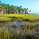 Urge the EPA to Protect Local Wetlands