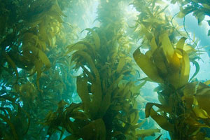 Heal the Bay Santa Monica Pier Aquarium Underwater Parks Day