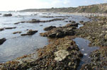 Heal the Bay Tidepool Tour Membership special