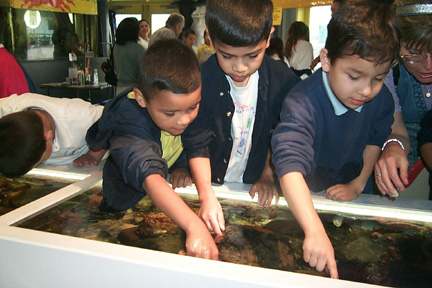 Boys at the Touch Tanks
