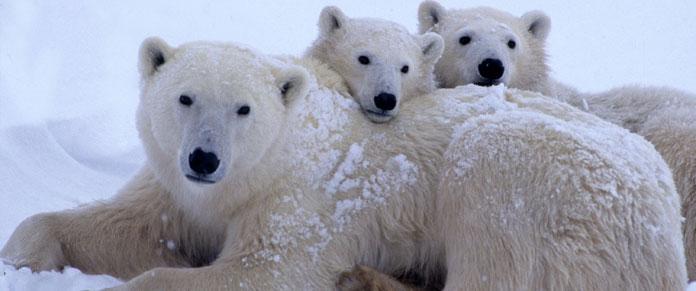 Polar Bear Trip