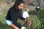 Willow Tree Planting - Stream Restoration at Malibu Creek State Park