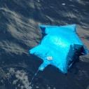 Balloons are marine debris too!