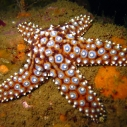 California marine protected area ocean MLPA coast network Department of Fish and