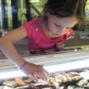 Holiday hours at Santa Monica Pier Aquarium