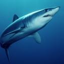 mako shark angler science Santa Monica Pier Aquarium ecosystem Hermosa Beach
