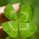 Stay Green on St. Patrick's Day, shamrock, Heal the Bay