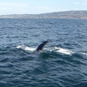 Heal the Bay's whale watching trip