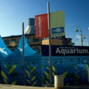 The Santa Monica Pier Aquarium celebrates nine years