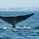 2014 whale orcas marine mammal donate Heal the Bay clean water Aquarium
