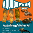 Aquadoption