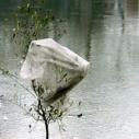 Plastic Bag Ban Update - In Water Tree