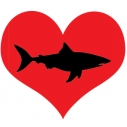 I heart sharks shark week shark love Heal the Bay