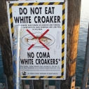 white croaker sign