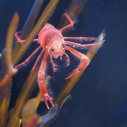 Macro photo of crab at Santa Monica Pier Aquarium