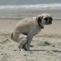 Spouting Off: Santa Monica Dog Beach