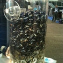 WESTEC 2011 Mussel water filtration exhibit
