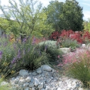 water wise LADWP California native plants lawn removal drought