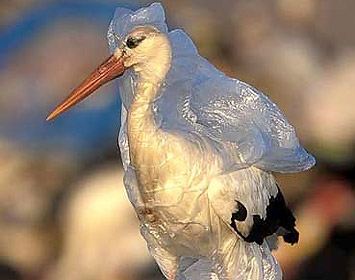 Bird entangled in plastic bag