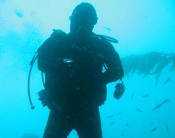 Santa Monica Pier Aquarium Diver