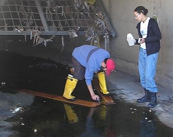 Water Sampling in Compton Creek