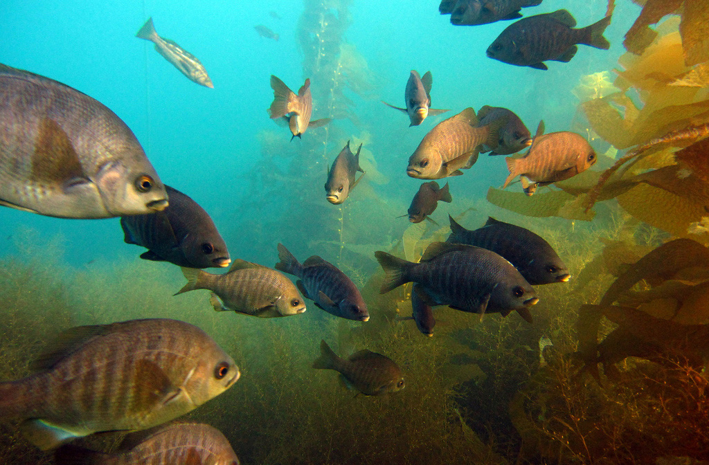 School of Fish at Underwater Park